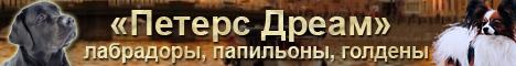 Петерс Дреам - папильоны, лабрадоры, голдены